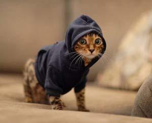 pet-hoodie